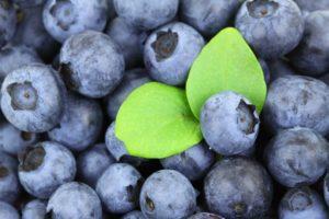 blueberries w leaf