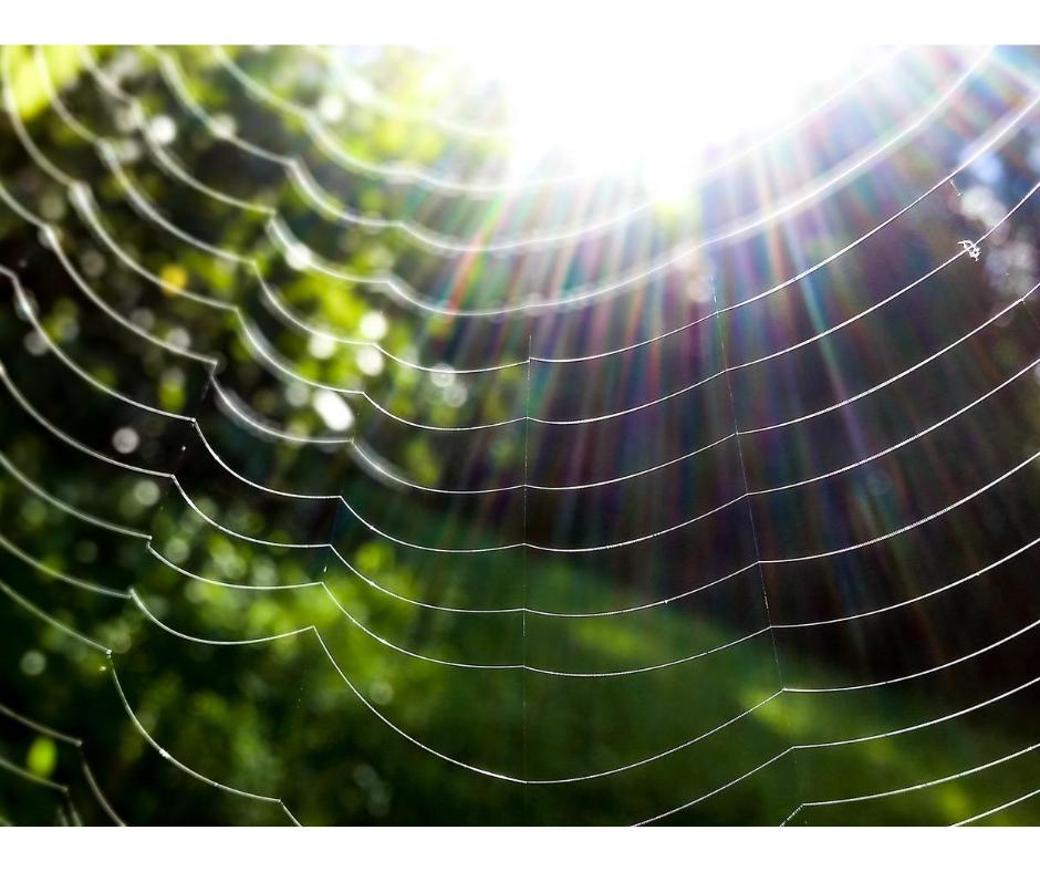 web of worry